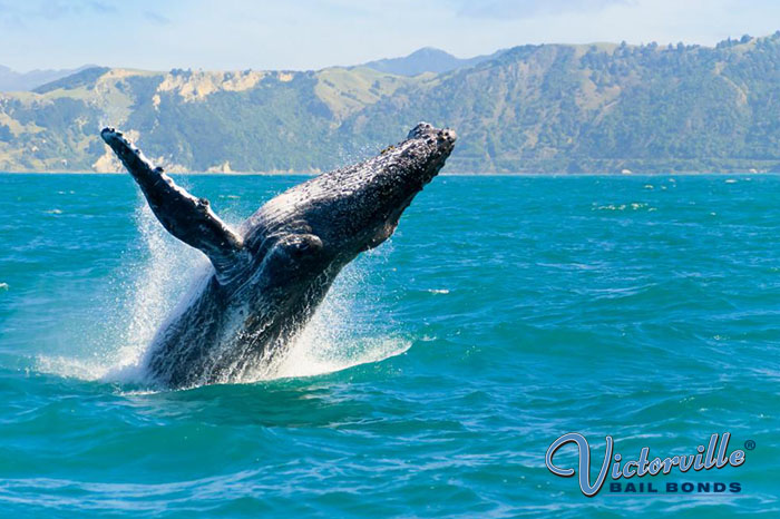 Have Plans to Go Whale Watching?