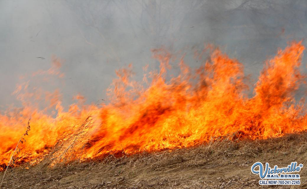 Wildfire Tips and Arson Laws