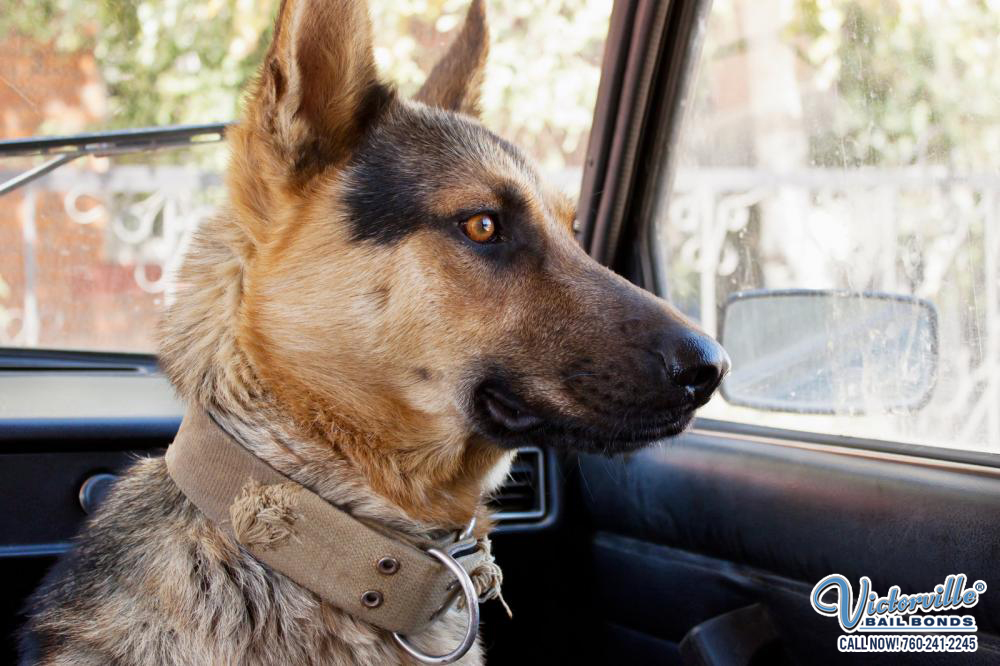 Is It Legal to Leave a Pet Alone in a Cold Car?